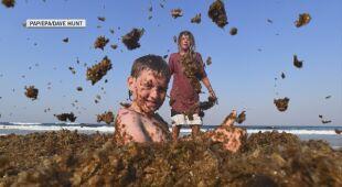 U wybrzeży Australii obficie zakwitły brunatnice