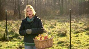 Ogrody ze starymi odmianami jabłoni, odc.412